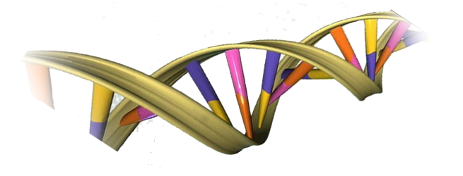 Séquence d'ADN